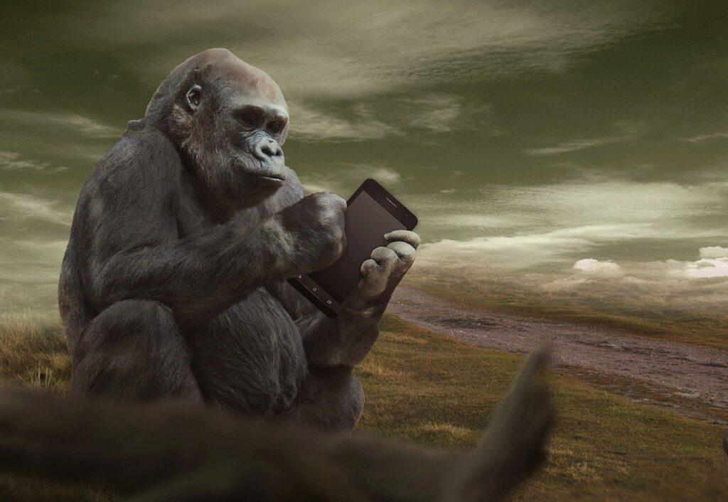 fields, gorilla, tablet